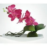 Composition Orchidée Rose
